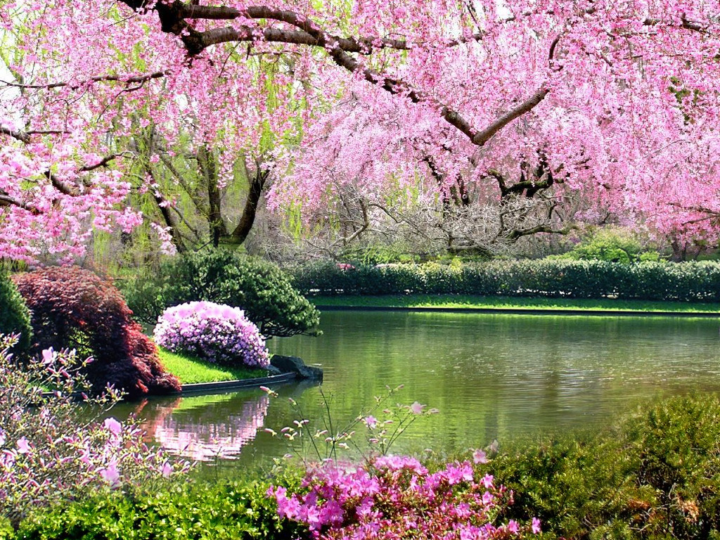 Springtime of My Heart - IslamiCity - photo#23
